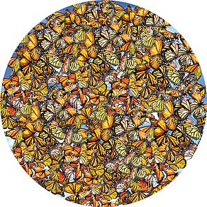 SUNSOUT Puzzle Round 1000 Piece Monarch Frenzy (35047)